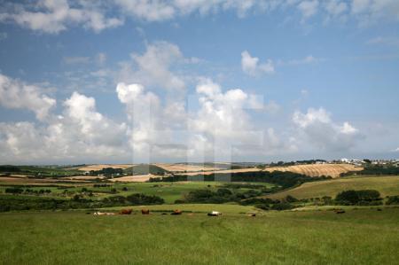 Hügelige Landschaft bei Polzeath, Cornwall